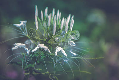 Photograph - Nature's Diversity by Elvira Pinkhas