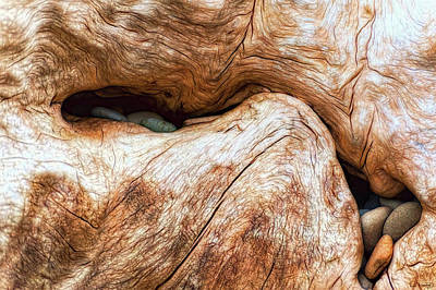 Photograph - Nature's Driftwood Art by Dee Browning