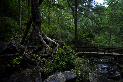 Photograph - Nature's Embrace by Warren Home Decor