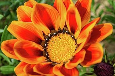 Photograph - Nature's Flames by Lynn Bauer