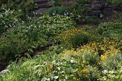 Photograph - Natures Garden by Deborah  Crew-Johnson