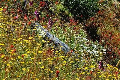 Photograph - Nature's Garden by Steve Warnstaff