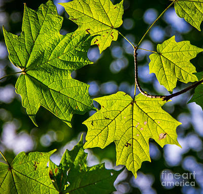 Photograph - Natures Going Green Design by Michael Arend