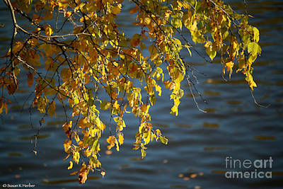 Photograph - Nature's Gold by Susan Herber