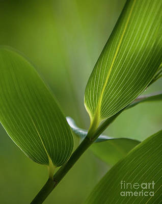 Photograph - Natures Green Palette Four by Heiko Koehrer-Wagner