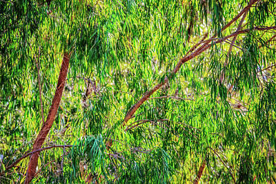 Print featuring the photograph Natures Greens, Yanchep National Park by Dave Catley