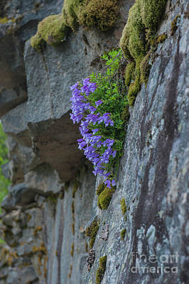 Photograph - Natures Hanging Basket by Rod Wiens