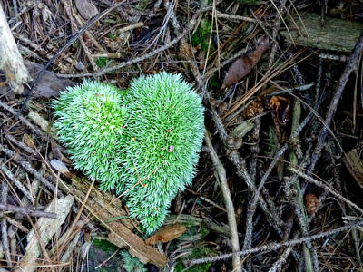 Photograph - Nature's Heart by Brenda Conrad