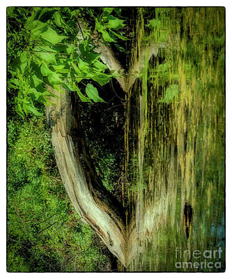 Photograph - Nature's Heart by Joann Long