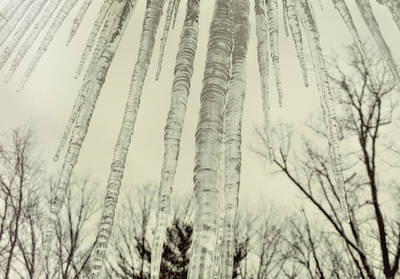 Nature's Ice Pop Art Print by JAMART Photography