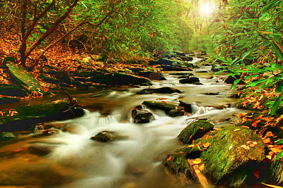 Creek Photograph - Natures Journey by Darren Fisher