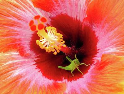 Photograph - Natures Kaleidoscope by Karen Wiles