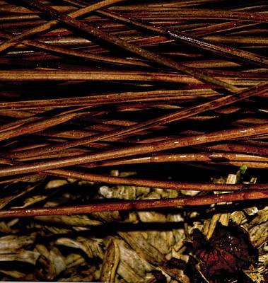 Photograph - Nature's Lattice by Gina O'Brien