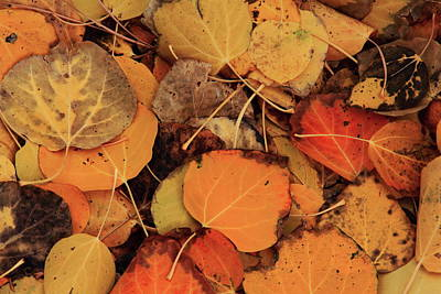 Autumn Colored Quilts Photograph - Nature Creates A Leaf Quilt by Diane Zucker