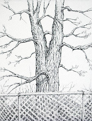 Drawing - Nature's Lines by Rebecca Davis
