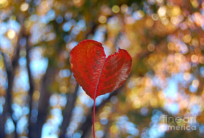 Photograph - Nature's Love by Debra Thompson