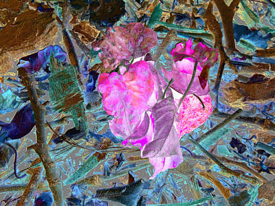 Nature's Love Art Print by Kenneth James