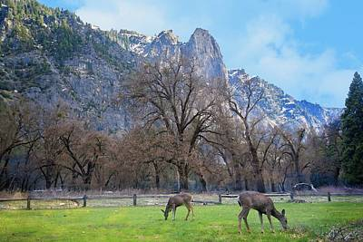 Photograph - Nature's Majesty In Yosemite Valley by Lynn Bauer