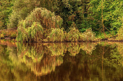 Photograph - Nature's Mirror by Wim Lanclus