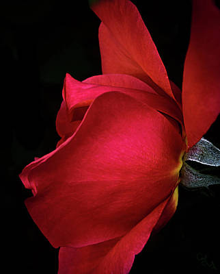 Photograph - Natures Passion by Camille Lopez