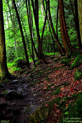 Photograph - Natures Path by Lisa Wooten