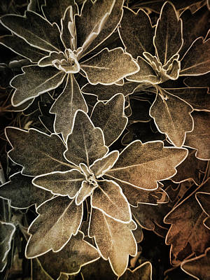 Photograph - Natures Patterns by Jill Love