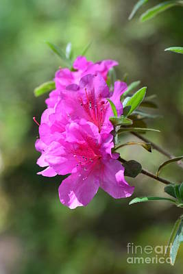 Photograph - Nature's Pink by Maria Urso
