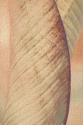 Art Print featuring the photograph Nature's Plant Leaf Abstract by Julie Palencia