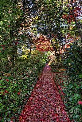 Have A Cupcake - Natures red carpet.  Pathway in Autumn by Leah-Anne Thompson