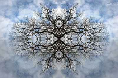 Mandala Photograph - Nature's Reflections by Debra and Dave Vanderlaan