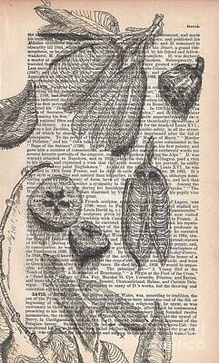Seed Pods Drawn On Antique Pages  1884 Cycopedia Original by Maria Hunt
