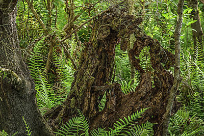 Photograph - Nature's Sculpture by Richard Goldman