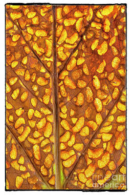 Photograph - Nature's Stained Glass by David Waldrop