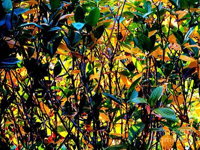 Photograph - Natures Stained Glass by Tim Townsend