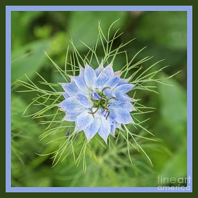 Photograph - Natures Star by Wendy Wilton