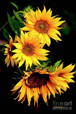 Photograph - Natures Sunflower Bouquet by Dale E Jackson
