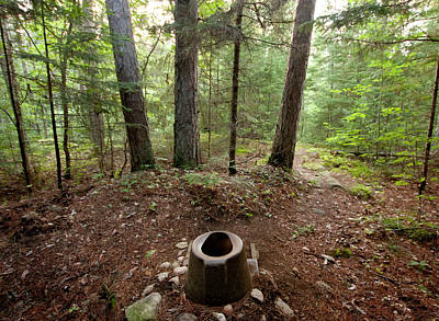 Photograph - Nature's Toilet by Sandy Swanson