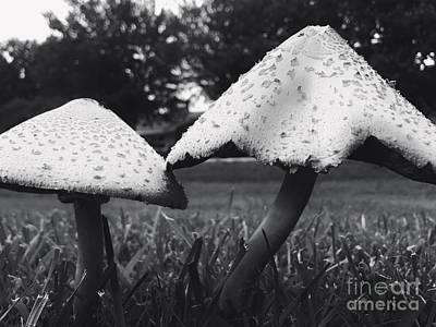 Photograph - Nature's Umbrellas by Jenny Revitz Soper