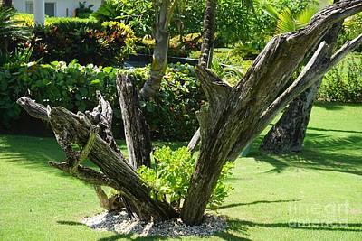 Photograph - Nature's Sculpture by Jimmy Clark