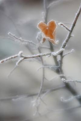 Photograph - Nature's Valentine by Diane Alexander