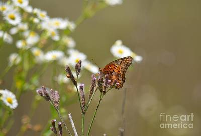 Photograph - Nature's Way by Maria Urso