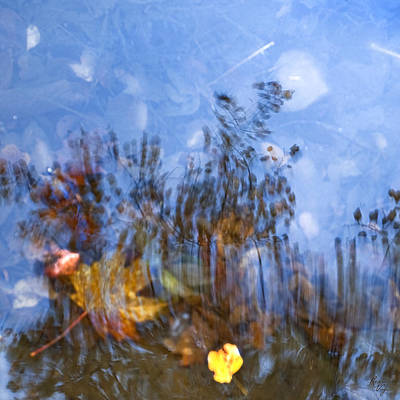 Naturpainting Iv Print by Renata Vogl
