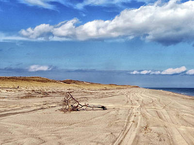 Photograph - Nauset Beach Driftwood by Constantine Gregory