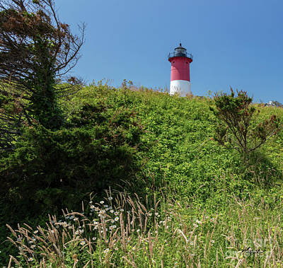 Photograph - Nauset Lighthouse With Daisies Cape Cod by Michelle Constantine