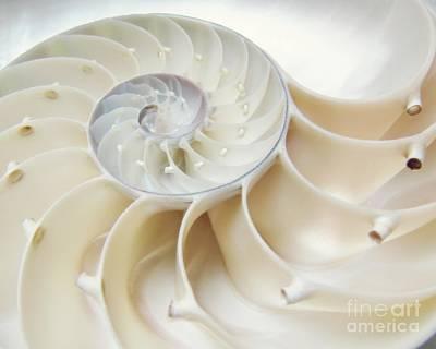 Nautilus Photograph - Nautilus 4by5 by MingTa Li