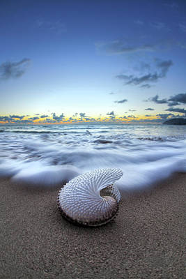 Zen-like Photograph - Nautilus By Nature by Sean Davey