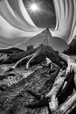 Photograph - Nautilus by Dario Infini