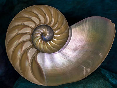 Photograph - Nautilus by Jean Noren