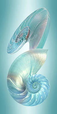 Photograph - Nautilus Jewel Of The Sea - Vertical by Gill Billington
