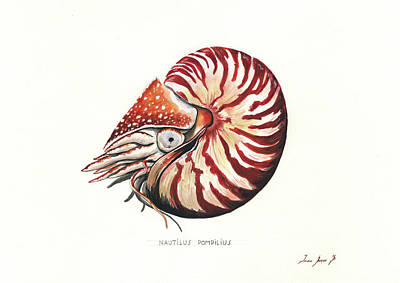 Nautilus Painting - Nautilus by Juan Bosco